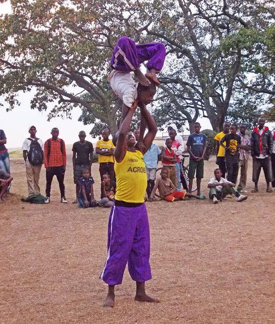 ruandai akrobata  (ruandai akrobata )