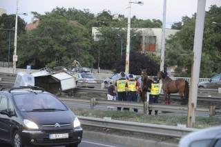 Lószállító balesete (lovak, baleset, )