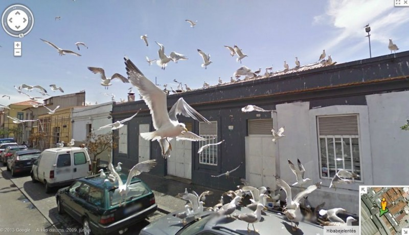 Madarak (google street view, madarak)