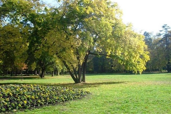 Szep-oszi-ido-Szegeden(650x433).jpg (Szép őszi idő Szegeden)