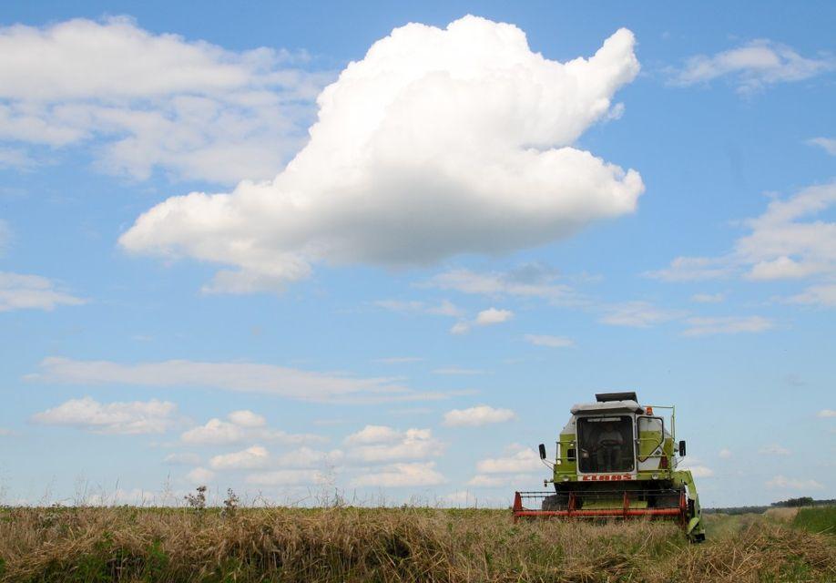 aratas(960x640)(1).jpg (aratás, felhő, )