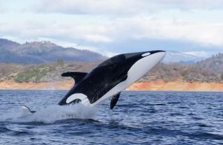 bálna (bálna)