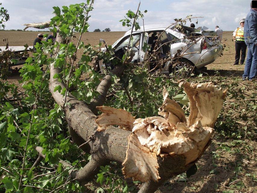 fának csapódott (fának csapódott, halálos baleset, )