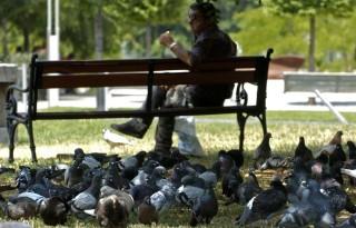 galambok a deák téren (galambok a deák téren)