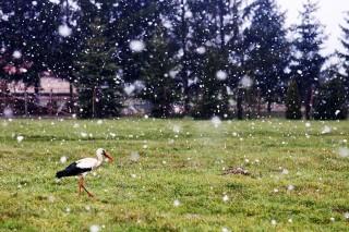 havazás (havazás)