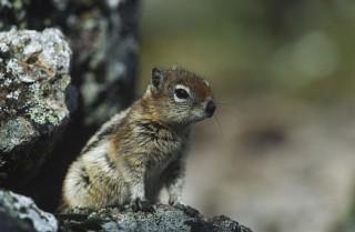 mókus (mókus, )