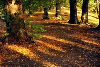 ősz-napsütés (erdő, ősz, )