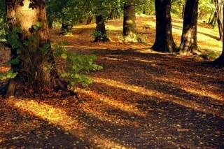 osz-napsutes(1)(960x640).jpg (erdő, ősz, )