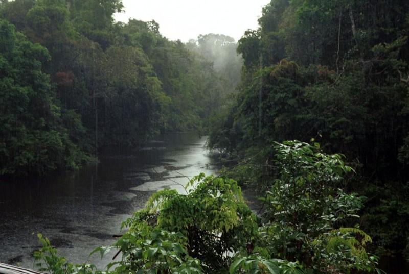 Amazonas (amazonas, dzsungel, esőerdő, )