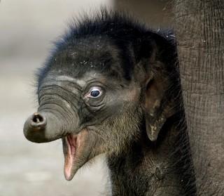 Elefant(960x640)(2).jpg (elefánt, )