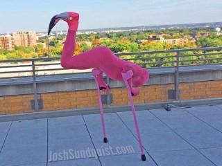 Josh Sundquist halloweeni jelmeze (jelmez, flamingó, halloween, )