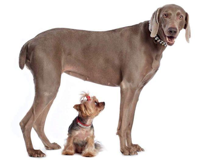 Kutyák (kutyák, )