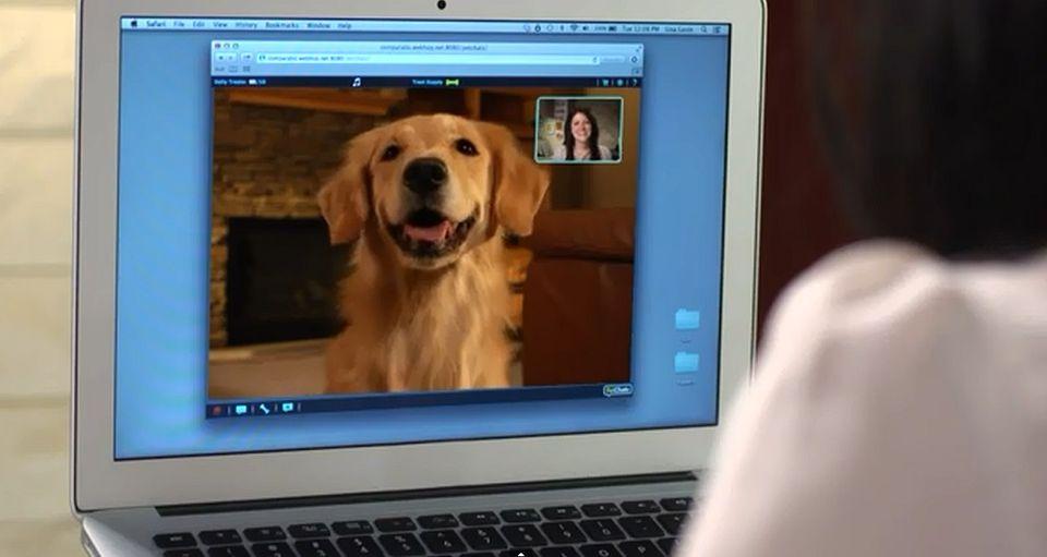 Petchatz (videochat, kutya, számítógép, )