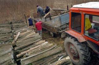 Tüzifa pakolás (tüzifa, tüzelő, traktor, )