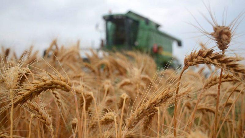aratas(210x140)(1).jpg (aratás, búza, mezőgazdaság, )