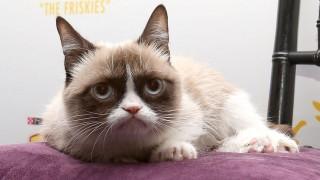 grumpy cat (macska, vicces, )