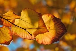 időjárás (időjárás, ősz)