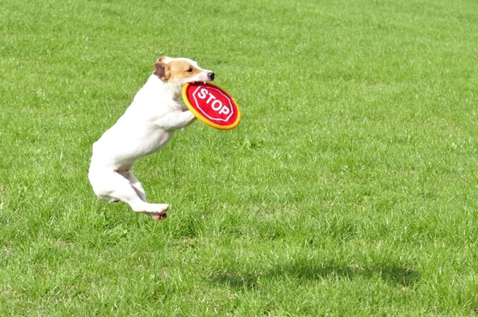 kutya (kutya)