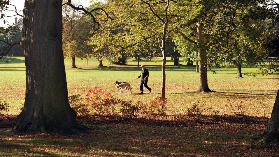 kutyasétáltatás (kutya, park, természet, )
