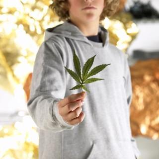 marihuana(960x640)(7).jpg (marihuána, )