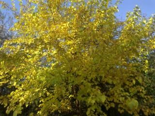 ősz, napsütés,  (ősz)