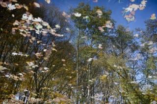 őszi táj (ősz, )
