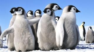 pingvin(960x640)(1).jpg (pingvin, hideg, )