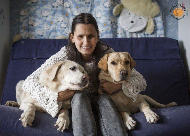 vakvezető kutyák (vakvezető kutyák)