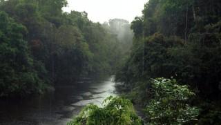 Amazonas(960x640)(1).jpg (amazonas, dzsungel, esőerdő, )