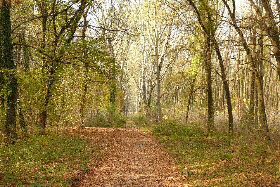 Kása-erdő (kása-erdő, erdő, őszi erdő, ősz)