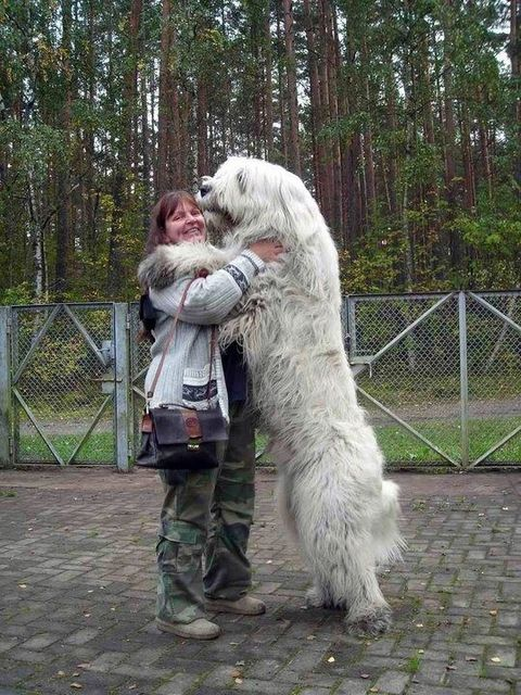 Kutya1 (kutya, napi cuki, cukiság, cuki állatok, )