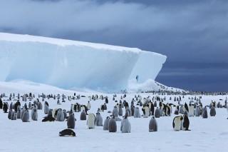 antarktisz (pingvin, )