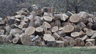 fa (tűzifa, )