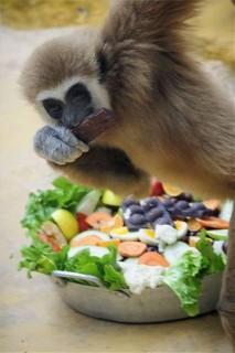 gibbon csokit eszik (gibbon, )