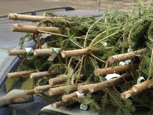 karácsonyfa (karácsonyfa, )