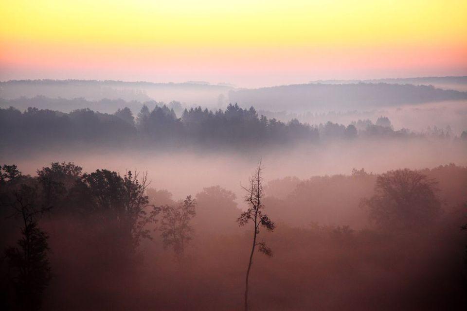 köd (köd, )