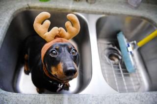 Kutya5 (kutya, napi cuki, cukiság, cuki állatok)