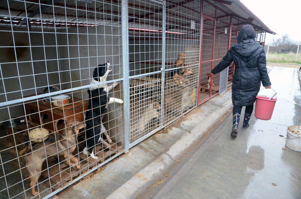kutyák menhelyen (kutyák, állatmenhely, )