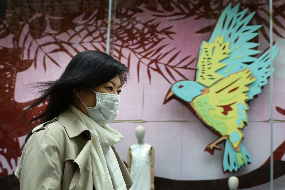 madarinfluenza(960x640)(1).jpg (madárinfluenza, )