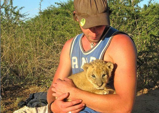 oroszlán (oroszlán, )