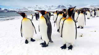 pingvin(430x286)(1).jpg (pingvin, hideg, )
