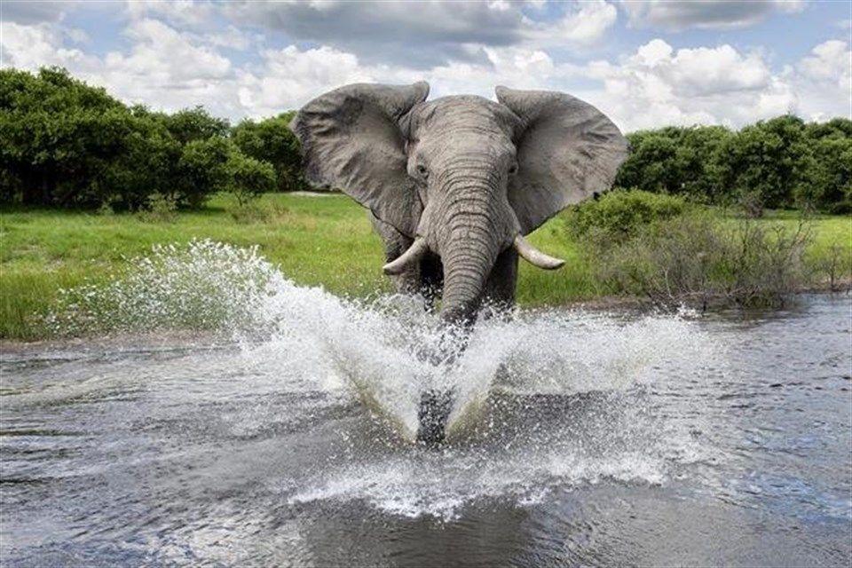 Elefant(2)(960x640).jpg (elefánt)