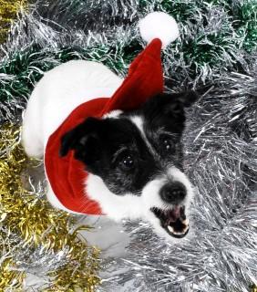 állatok karácsonya (állatok karácsonya, )