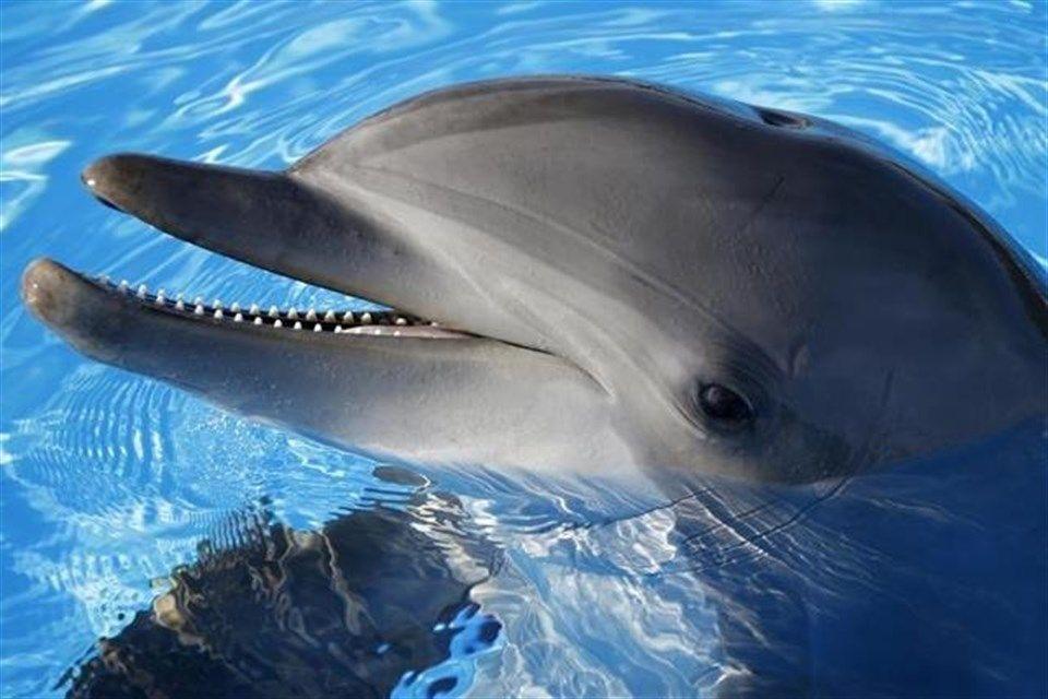 delfin(1)(960x640).jpg (delfin, )