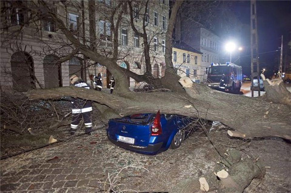 szélvihar budapesten, autóra dőlt fa, kidőlt fa (kidőlt fa)