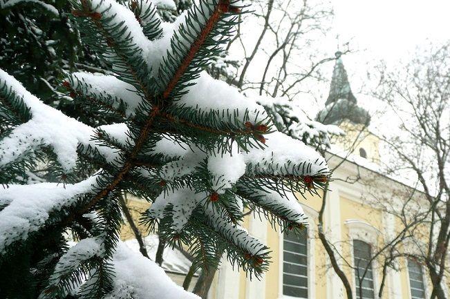 Havas fa (hó, fenyő, havazás, )