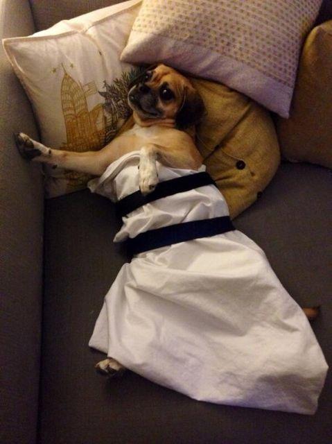 Lawrencing kutya (Jennifer Lawrence, kutya)