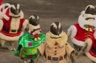 Pingvin(960x640).jpg (pingvin)