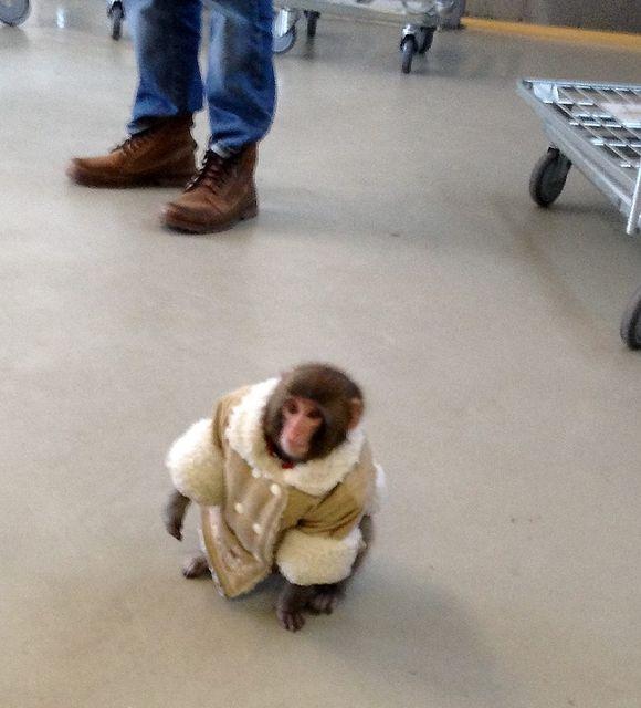 darwin ikea majom 1 (ikea, majom, )