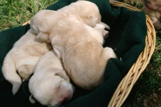 kiskutyák (kutyus, kutyák, kutya)